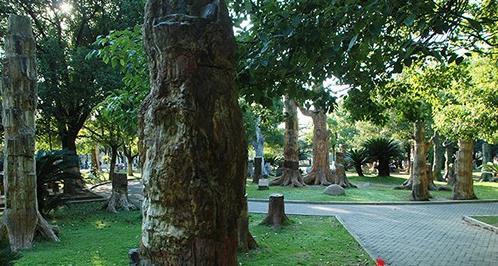 香格里拉花海图片_中国地质大学(武汉)化石林_旅泊网