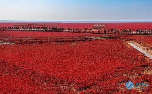 红海滩风景廊道图片 红海滩风景廊道风景图