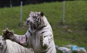 北京野生动物园门票多少钱 北京野生动物园有年票吗