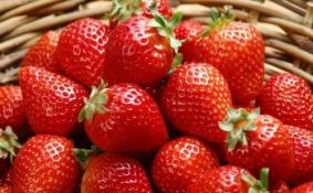 2018年广州白云区哪里有草莓摘