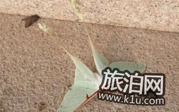 宁乡沩山密印寺灵吗 2018密印寺门票价格多少钱