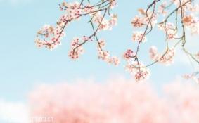2018日本樱花开放预测 2018年日本赏樱时间表