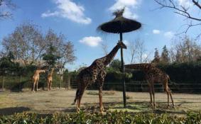 上海野生动物园停车场怎么收费 上海野生动物园停车场方便吗