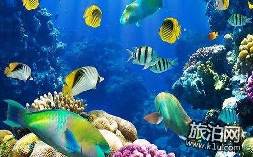 去北京富国海底世界怎么走 北京富国海底世界在哪里