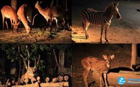 泰国夜间动物园多少钱 泰国夜间动物园交通+游览顺序