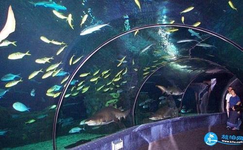 长风公园水族馆门票_2018上海长风公园海洋世界门票+交通+停车信息_旅泊网