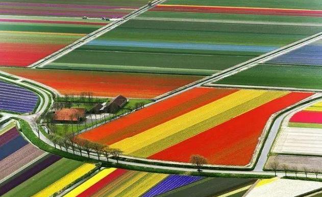 荷兰自驾游赏花攻略