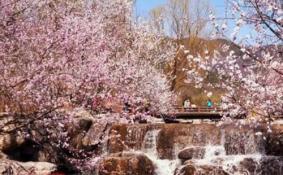 2018北京植物园桃花节限行吗 北京植物园桃花节怎么去/交通攻