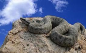 大连蛇岛门票多少钱 大连蛇岛需要门票吗