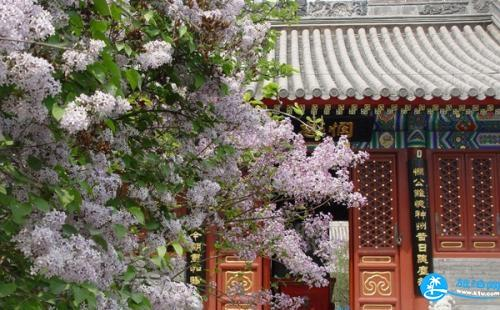 北京法源寺赏花攻略