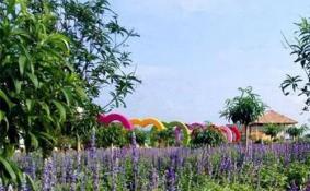 2018深圳百合花卉小镇花卉文化节要门票吗
