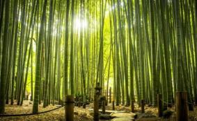重庆周边有哪些避暑的竹林景点