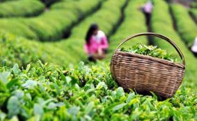 2018杭州国际茶叶博览会免费公交有哪些