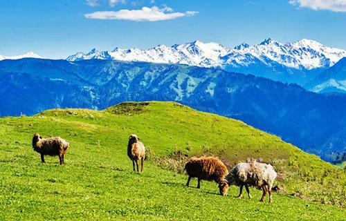 新疆旅游注意事项 去新疆要注意什么