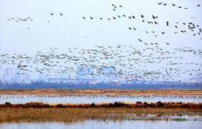武汉府河湿地在哪里+怎么去
