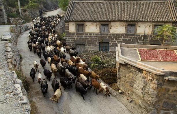 王家灿村旅游攻略 王家灿村在哪里