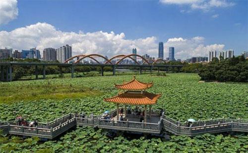 2018年5月深圳洪湖公园荷花开了吗