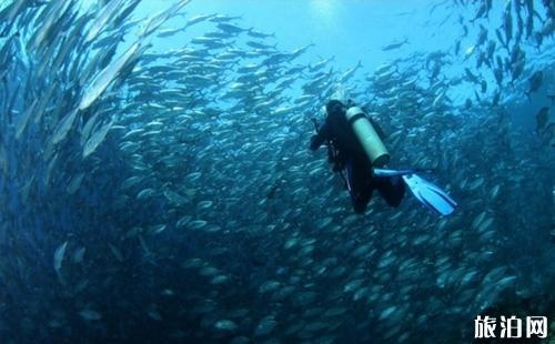 沙巴潜水点推荐 沙巴去哪潜水