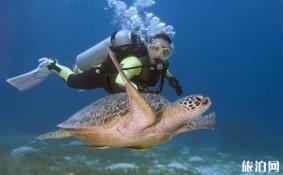 潜水证怎么考 ow潜水考证攻略2018 潜水装备有哪些