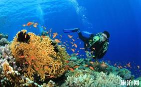 潜水证去哪里考比较好 7月适合去哪里潜水