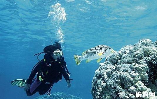 高氧潜水证多少钱 高氧潜水有哪些风险