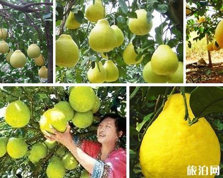 桂林特产有什么值得带 桂林特产有哪些