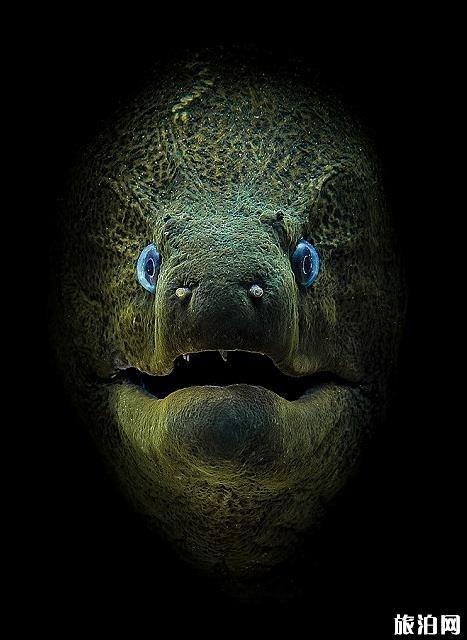水下拍照摄影作品欣赏 潜水杂志水下摄影获奖作品