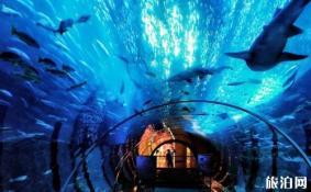 2018上海海昌极地海洋世界门票价格+优惠政策 上海极地海洋公园什么时候开业