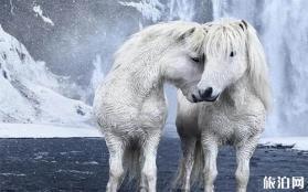 世界上最浪漫的事 冰岛马拍摄
