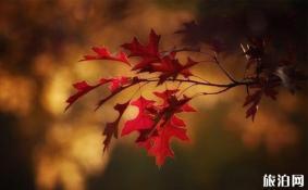 秋天叶子图片 怎么拍摄秋天叶子