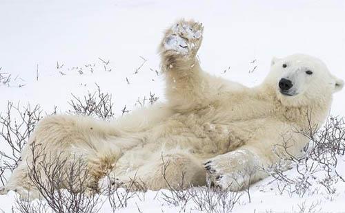 2018搞笑野生动物摄影大赛作品欣赏