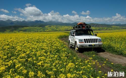 国外旅游租车和包车哪个更划算