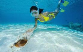 浮潜时被水母蛰了怎么办