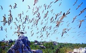 威海国际海水浴场怎么去