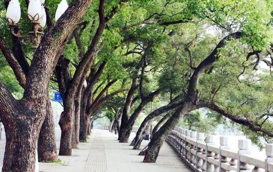 惠州文艺范的地方游玩推荐