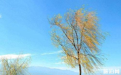 大理丽江旅游攻略图片