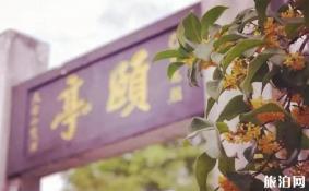 上海桂花开了吗 上海桂花出名的公园有哪些