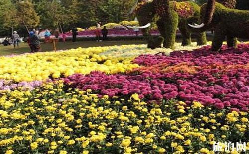 2018武汉解放公园菊花展时间是多少