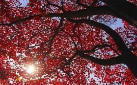 2018焦作青天河红叶节什么时候开始