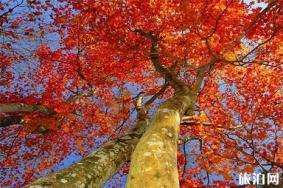 湖北看紅葉最好的地方推薦