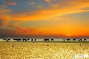 十一月南疆旅游有什么好看的