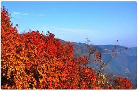 北京看红叶香山公园游玩攻略