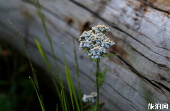 怎么把花拍的好看