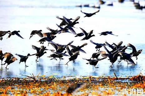 河南冬季观鸟攻略