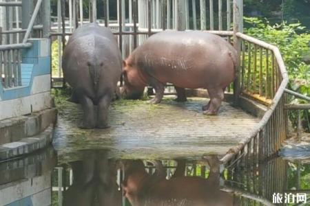 南宁动物园游玩攻略