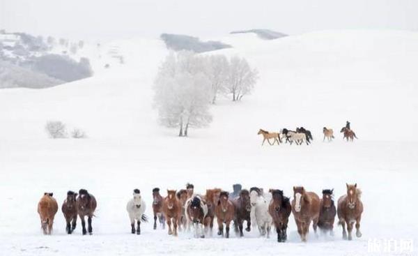1月国内最佳旅游的地方推荐