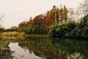 松南郊野公园开放了吗 2019上海松南郊野公园地址+门票