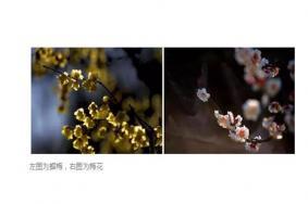 上海植物园的梅花开了吗 上海哪些梅花盛开2019
