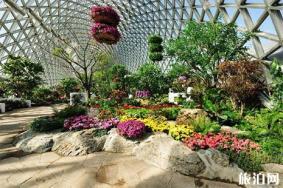 上海辰山植物园迎春花展