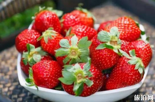苏州哪里有摘草莓的地方 2019苏州草莓采摘出时间+地点+价格